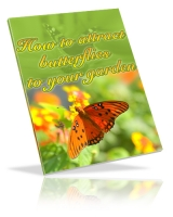 How To Attract Butterflies To Your Garden Private Label Rights