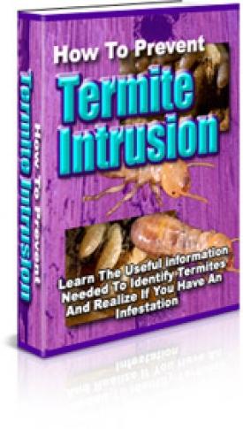 How To Prevent Termite Intrusion