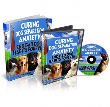 Curing Dog Separation Blog