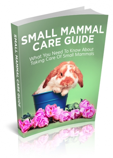 Small Mammal Care Guide